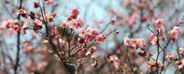 spring1-jumbo